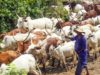 Nigeria: Herdsmen Kill Father of Two in Ekiti