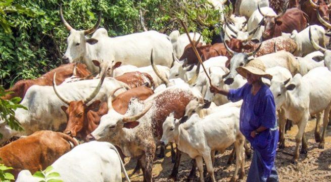 Nigeria: Herdsmen Kill Father of Two in Ekiti
