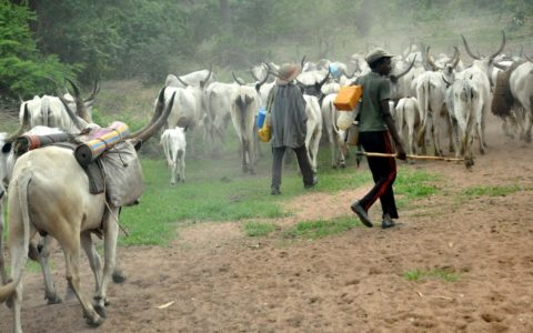 Herdsmen Behead Farmer In Iseyin