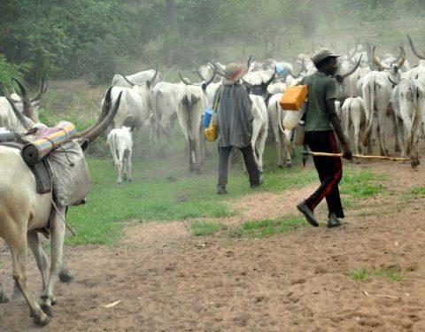 Herdsmen Behead Farmer In Iseyin