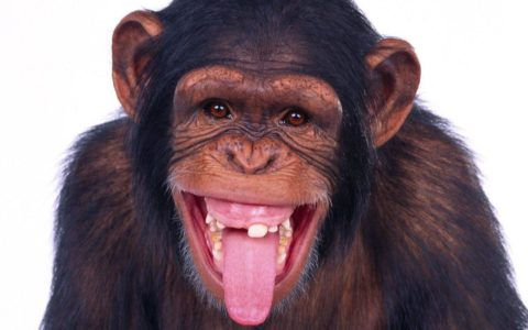 Nigeria: Shocker! Monkeys Swallow N70m Belonging to Northern Senators