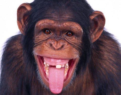 Nigeria: Shocker! Monkeys Swallow N70m Belonging to Northern Senators