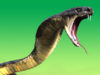 Nigeria: Snake Attacks Pastor In Abuja