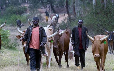 Opinion: Let's Talk RUGA aka Fulani Cattle Colonies by Nnamdi Elekwachi