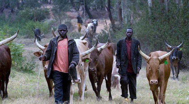 Opinion: Let's Talk RUGA aka Fulani Cattle Colonies by Nnamdi Elekwachi
