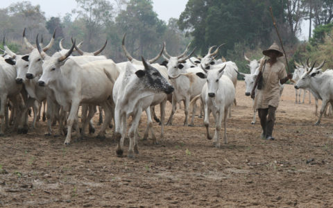 Opinion Buhari's Ruga Insult By Lasisi Olagunju
