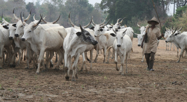 Opinion Buhari's Ruga Insult By Lasisi Olagunju