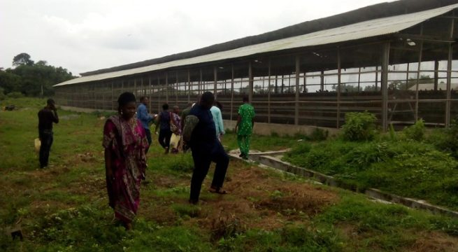 Lagos to give Agric Estates, Farm Settlements Facelift - Sanwo-Olu