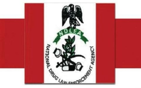 Recruitment: NDLEA Releases List of Successful Applicants