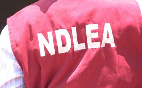 NDLEA Intercepts Bandits With AK-47 Rifles, 78 Rounds of Live Ammunition